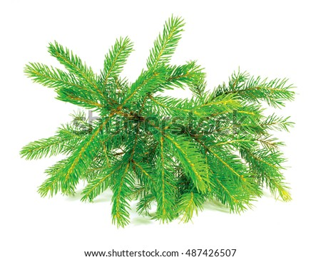 small spruce tree isolated on white #487426507