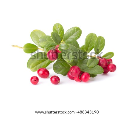 Fresh hand-picked forest Cowberry isolated on white background #488343190