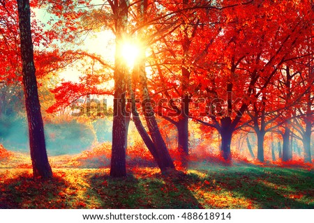 Autumn. Fall scene. Beautiful Autumnal park. Beauty nature scene. Autumn landscape, Trees and Leaves, foggy forest in Sunlight Rays  #488618914