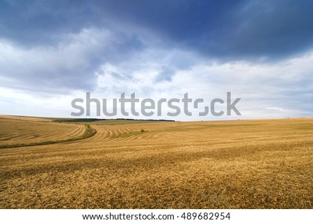 backdrop of ripening yellow corn field Copy space of the setting sun rays on horizon in rural meadow Close up nature photo Idea of a rich harvest
