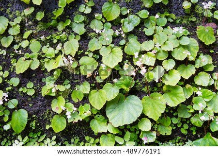 Green leaf background. #489776191