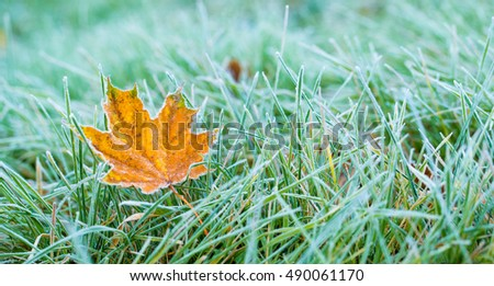 Frost on the leaf and grass. Royalty-Free Stock Photo #490061170