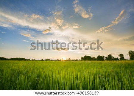 Paddy field with sunrise #490158139