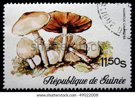 GUINEA - CIRCA 1977: A stamp printed in Republic of Guinea shows mushrooms Agaricus campestris, circa 1977 #49022008