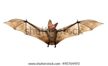 Flying Vampire bat isolated on white background,  Royalty-Free Stock Photo #490764493