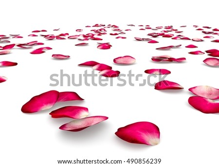 Red rose petals scattered on the floor. Isolated white background #490856239