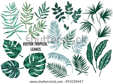 Vector tropical palm leaves, jungle leaves, split leaf, philodendron leaves, set isolated on white background