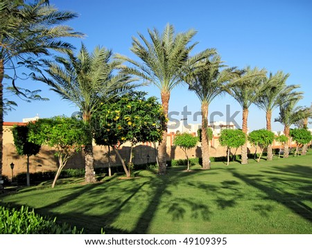 Green park on Sinai peninsula. #49109395