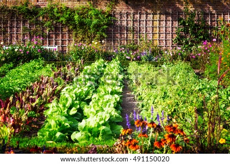 Vegetable garden in late summer. Herbs, flowers and vegetables in backyard formal garden. Eco friendly gardening #491150020