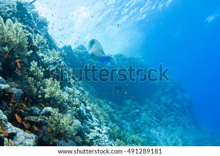 Abstract underwater scene of Red sea, Egypt. #491289181