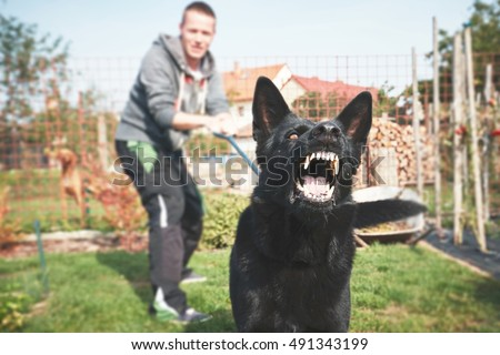 Aggressive dog is barking. Young man with angry black dog on the leash.  Royalty-Free Stock Photo #491343199