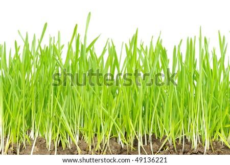 green grass #49136221
