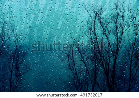 Sadness Rain drop on glass window with Dry Tree in Fall or Autumn Outside, Autumn Winter Rain or Feeling Sadness concept