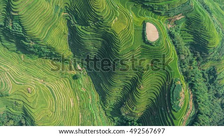 Top view or aerial shot of fresh green and yellow  rice fields.Longsheng or Longji Rice Terrace in Ping An Village, Longsheng County, China.