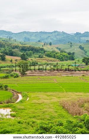 Natural View at Chiang Rai Province, Thailand. #492885025