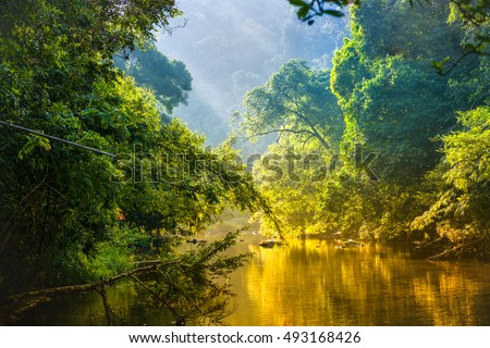 Amazing scenic view Tropical forest with jungle river on background green trees in the morning rays of the sun #493168426