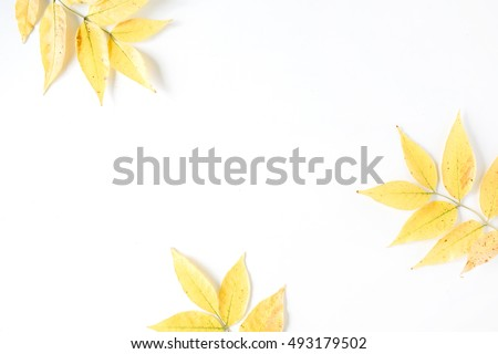 yellow fall autumn leaves. Autumn floral frame. flat lay, top view #493179502