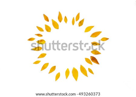Yellow leaves arranged in round shape on white background. Flat lay, top view. Autumn leaves of Platycodon grandiflorus #493260373