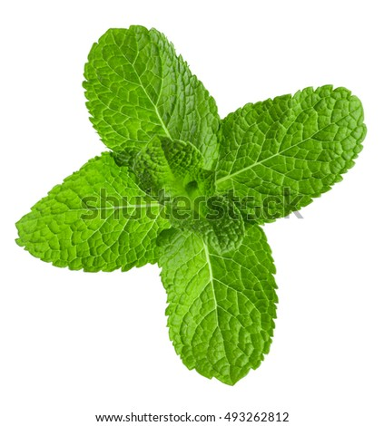 mint leaves isolated on the white background #493262812