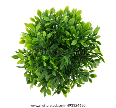 Small artificial tree in a pot isolated in white background. Concept image for interior design and decoration of home and office., top view #493324630
