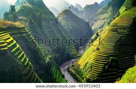 Sun light on terraces rice fields. rice fields in Northwest of Vietnam. Royalty-Free Stock Photo #493953403