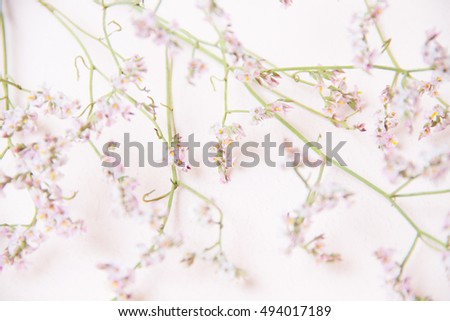 Close up of little pink flowers on pink background. Pastel background. #494017189