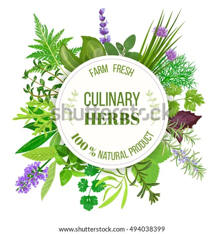 Culinary herbs big set with round emblem. Vector illustration. Design for cosmetics, restaurant, market, menu, market, health care products, spa salon, ready logo, icon, banner, web, tag, template, #494038399