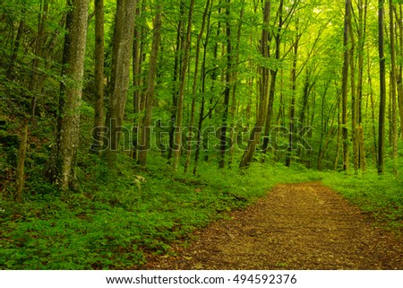 Beautiful trail in the woods, with lush green foliage, in spring #494592376