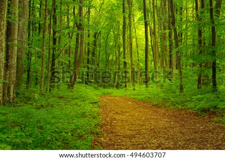 Lush green foliage and scenic hiking trail in the forest in spring #494603707