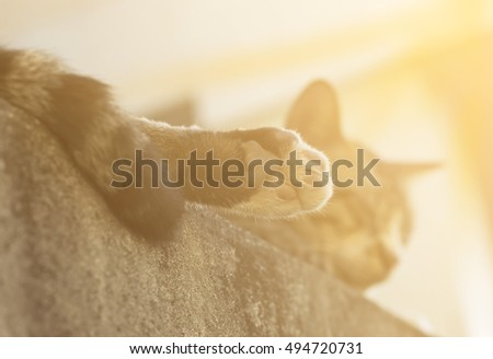paw of cat with sunset light #494720731