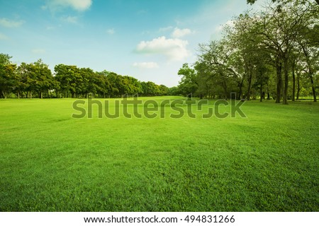 landscape of grass field and green environment public park use as natural background,backdrop #494831266
