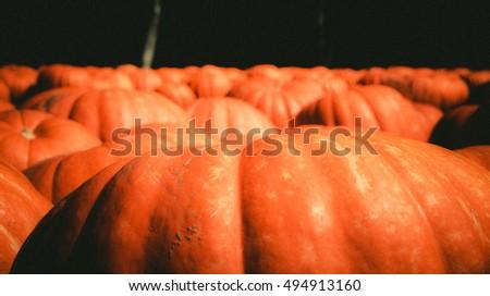Pumpkins  #494913160