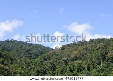 forest in the mountains with blue sky  #495015979