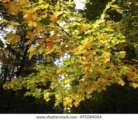beautiful scenery and autumn elements with views of the nature of the photos micro-stock #495084064