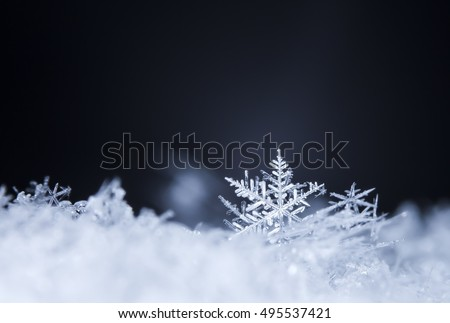 natural snowflakes on snow, photo real snowflakes during a snowfall, under natural conditions at low temperature #495537421