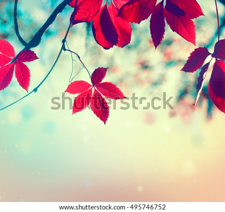 Autumn leaves background. Beautiful Fall. Nature. Colorful autumnal leaf over blurred background. Beauty Autumn scene #495746752