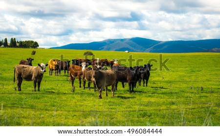 Australia farm in countryside  #496084444
