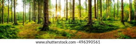 Sunrise in the forest #496390561