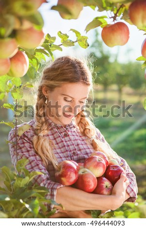 Young woman picking apples from apple tree on a lovely sunny summer day  in orchard #496444093