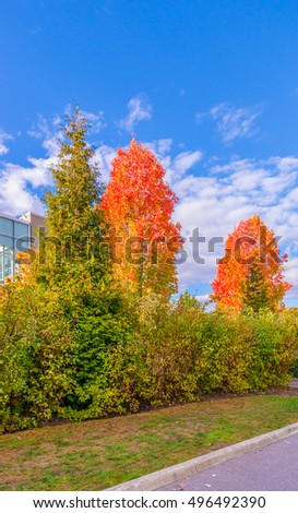 Trees along the empty street in the colorful fall, autumn season. #496492390