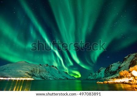 Aurora Borealis in Tromso, Norway in front of the Norwegian fjord, winter season. #497083891