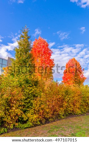 Color of the autumn, fall. Gorgeous sea walk in the park.  Vancouver. Canada. #497107015