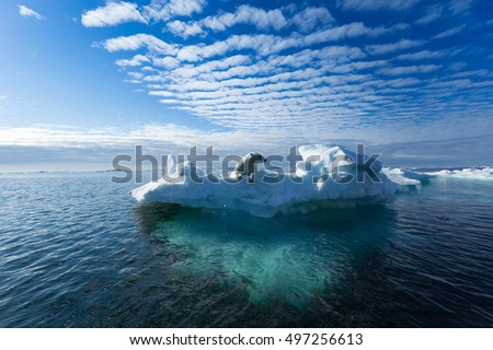 A polar bear sitting on the edge of an ice floe in the Svalbard Archipelago. #497256613