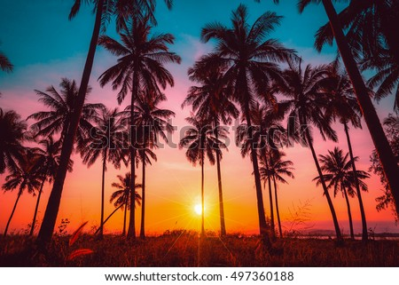 Silhouette coconut palm trees on beach at sunset. Vintage tone. #497360188