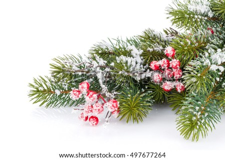 Christmas fir tree branch with holly berry and snow #497677264