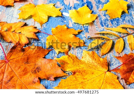 Frame from vivid colorful autumn leaves on the grunge wooden cyan desk, vintage seasonal background #497681275