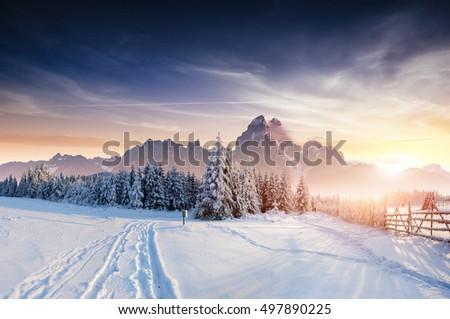 the winter road. Dramatic scene. Carpathian, Ukraine, Europe. #497890225