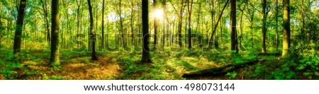 Forest panorama Royalty-Free Stock Photo #498073144