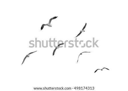 Group of birds flying on clear sky (Black and White) Royalty-Free Stock Photo #498174313