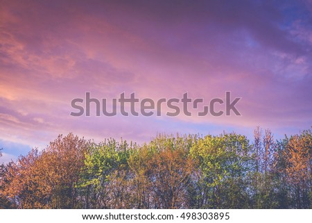 Trees in autumn colors in a violet sunrise in the fall #498303895